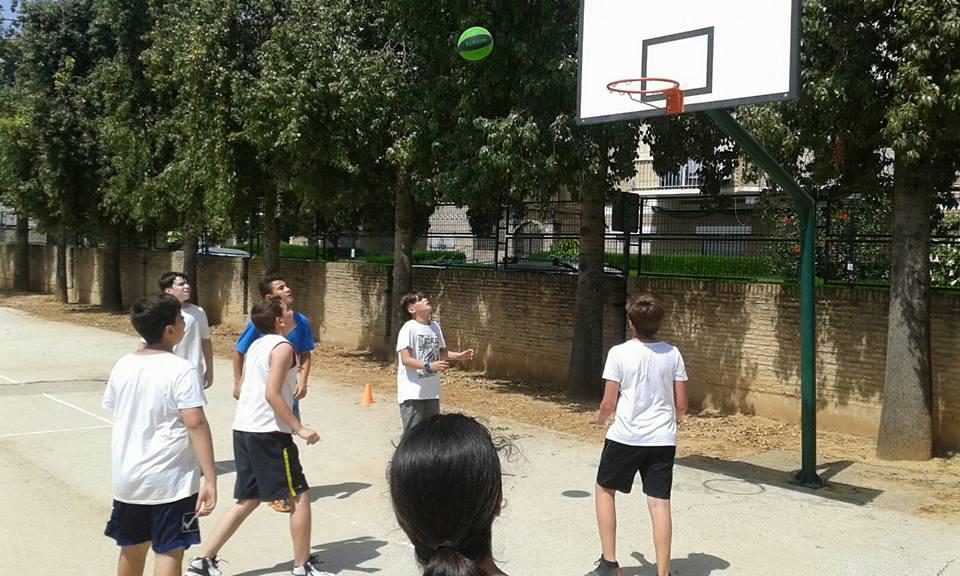Ligas deportivas primaria colegio aljarafe